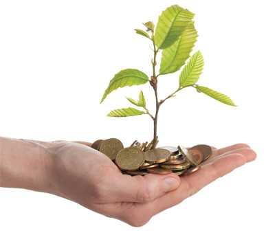 money roots plants